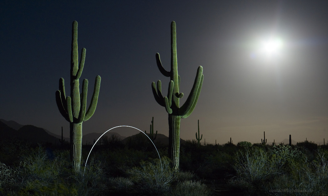 Lightmark No.111, Saguaro Cactus, Organ Pipe Cactus National Monument, Arizona, Light Painting, Night Photography.